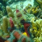 Schnorcheln - Bocas del Toro