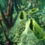 Tauchen in Bocas del Toro