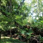 Wandern durch die Wälder einer Schokofarm - Bocas del Toro